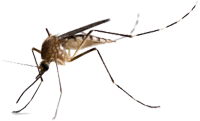 Zika Virus mosquito St John travel information