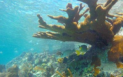 Snorkeling Trunk Bay Beach, St John, US Virgin Islands National Park